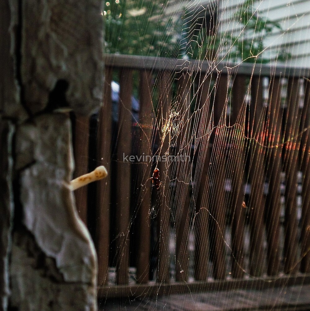 Spider web by kevinmsmith