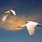 Flight of the Spoonbills by byronbackyard