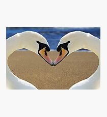 Swan Love Photographic Print
