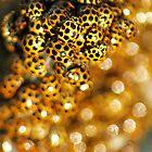 Ladybird Massing. by Steve Chapple