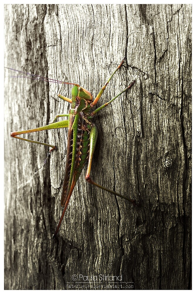 Its a bug eat bug world out there by Gozza