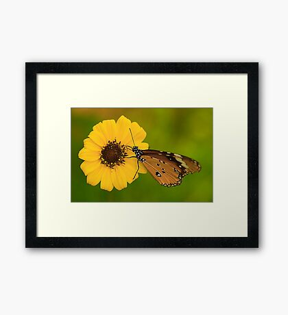 The Butterfly and Yellow Flower Framed Print