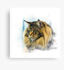 Purebred cat Canvas Print