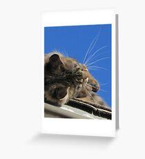khloe's wiskers Greeting Card