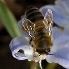 Buzz Buzz Buzz by Susan A Wilson
