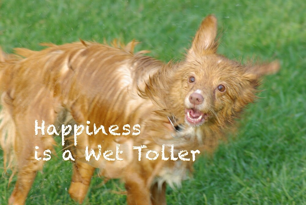A Wet Toller is a happy Toller by Raymond Holford