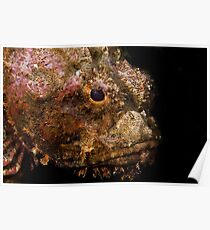 Scorpionfish (Scorpaenopsis oxycephala) Poster