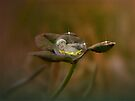 Colver Dew Drop Baby by Shelly Harris
