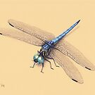 Dragonfly by Lars Furtwaengler