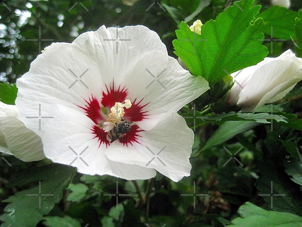 rose of sharon by LoreLeft27