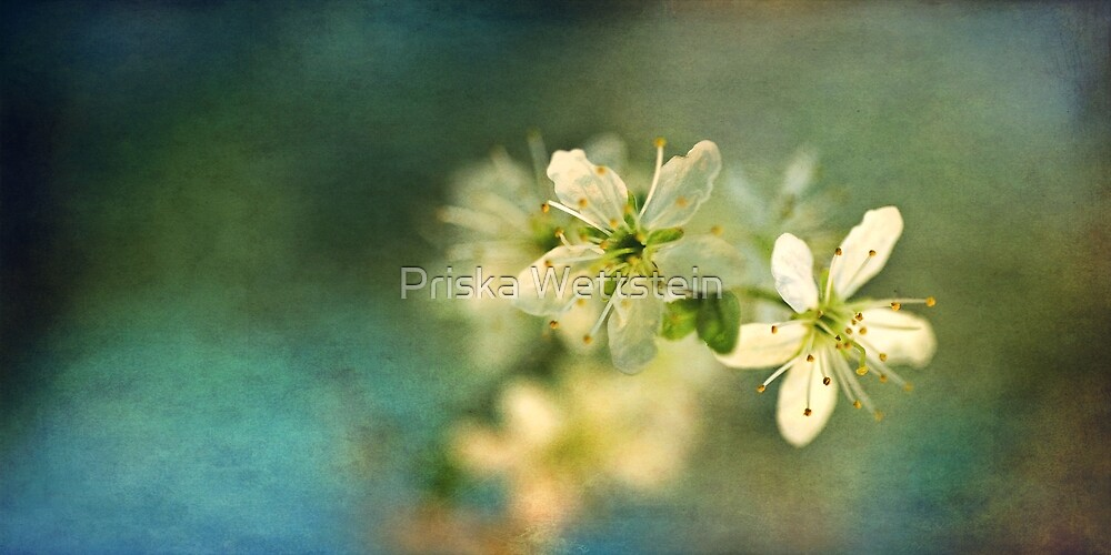 Dreamy hint of spring by Priska Wettstein
