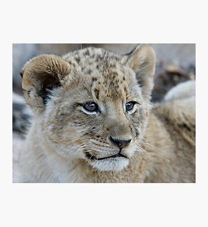 Male Lion Club Photographic Print
