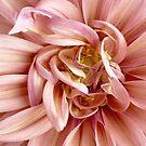 Rosa Blumenblüte von PrintsProject