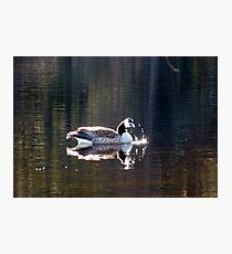 Water World - Sunbathing Photographic Print