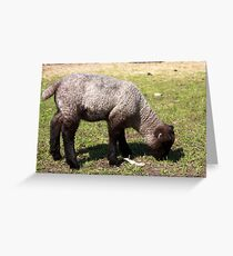 Spring Lamb I Greeting Card