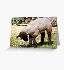Spring Lamb II Greeting Card