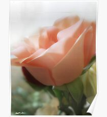 Mixed Cut Roses 4 Poster