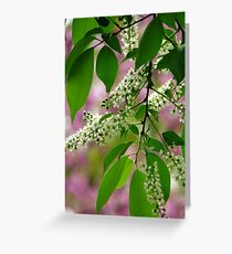 Wild Cherry Tree Blossoms Greeting Card