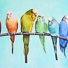 Rainbow Budgies by lukekellyart