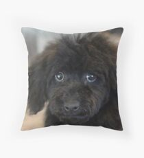 Sky, An Arizona Mini-Toy Poodle Throw Pillow