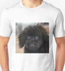 Sky, An Arizona Mini-Toy Poodle Unisex T-Shirt