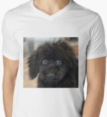 Sky, An Arizona Mini-Toy Poodle Men's V-Neck T-Shirt