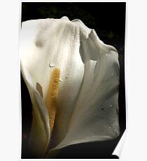 White flower 6736 Poster