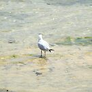 Lone Seagull - Newcastle by Emma Griffen
