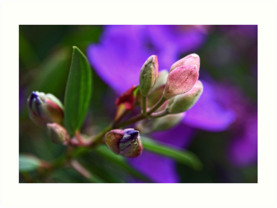 Pretty in Purple and Pink by Josette Halls