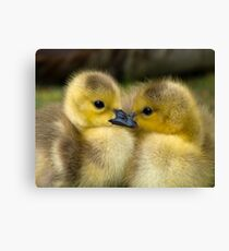 Baby Duck Love Canvas Print