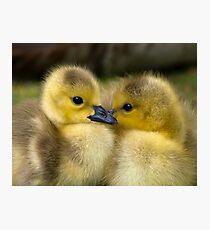 Baby Duck Love Photographic Print