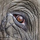 Elephant Eye by Fjfichman
