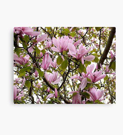 Magnolia (Tulip Tree) Canvas Print