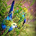Pale Headed Rosella in the basil... by Peter Doré