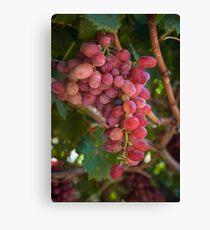 Fruit of the Vine.... Swan Valley, Western Australia Leinwanddruck