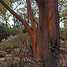 Reflected Glow,Kalgoorlie.West Australia by robynart