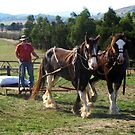 Working Horse at Gulf Station, Yarra Glen, Victoria by Bev Pascoe