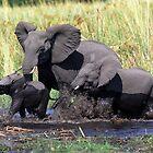 Family of elephants crossing water stream by leksele