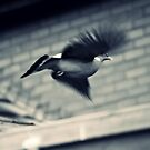 In Flight by Stephanie Hillson