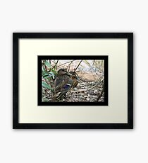 Sshhh ... Dont move and he might go away Framed Print