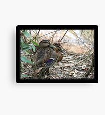 Sshhh ... Dont move and he might go away Canvas Print