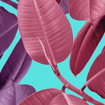 Ficus elastica in pink by motiashkar