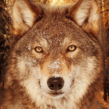 Wolf Head Collage  by LeoZitro