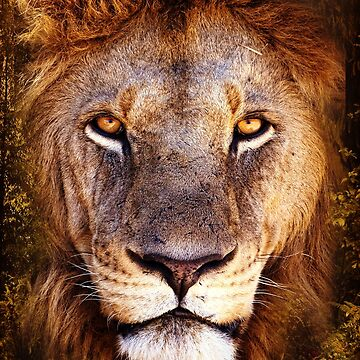 Lion Head Jungle African by LeoZitro