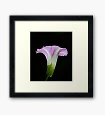 Simplicity of a Morning Glory Framed Print
