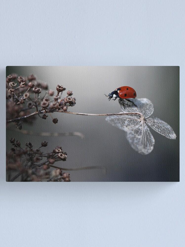 Alternate view of Ladybird on old hydrangea  Canvas Print