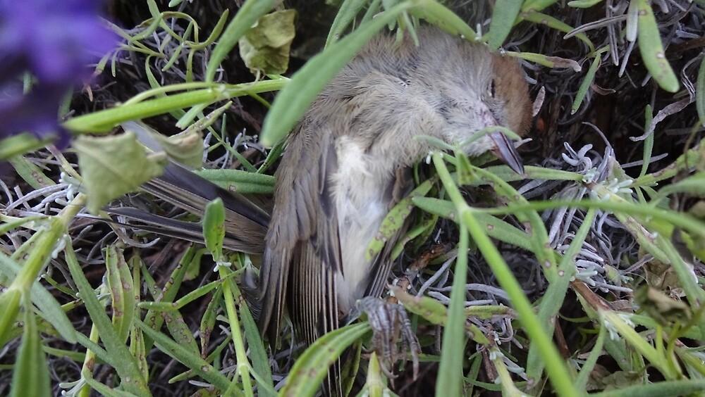 Dead bird in lavender. by edend