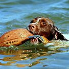 A salty dog by Alan Mattison