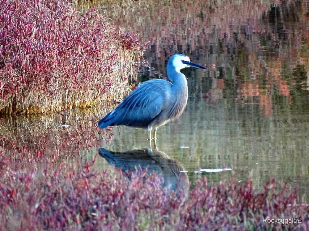 Bluey by Rocksygal52