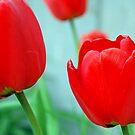 Tulip hips by MandaP